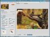 Mosaizer Pro Screenshot3